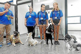 "Ibiza ""dogspital"" project to be extended"