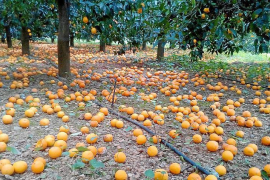 Oranges and eco-tourism: the week in Majorca