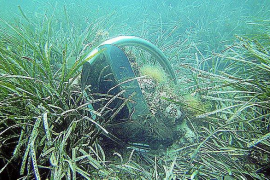 Scientists urging a speeding-up of sea grass protection decree
