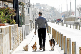 Minimum fine for dog mess in Palma to more than double