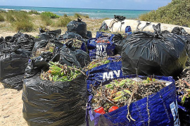 266 kilos of waste collected every day off Majorca's coast