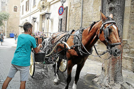 Palma City Council under fire under carriage horses