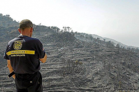 60% of area destroyed by 2013 fire has recovered