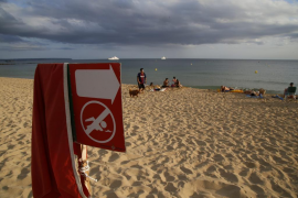 Palma beaches will have to close for the next two summers