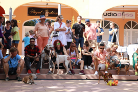 Fundraising in Puerto Portals for SOS Animal