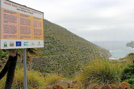 Government backs Pollensa control of Ternelles finca