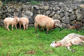 Farmer under investigation for shooting a German Shepherd