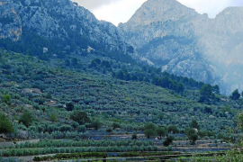 New Tramuntana brand to foster tourism