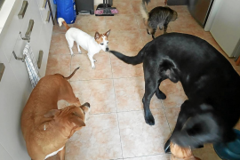 Reaction to Palma animal welfare bylaw proposals