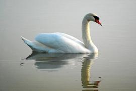 Increase in sightings of rare birds