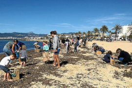 Clean-up at Palma beach