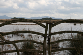 Albufera park increasing by over 400 hectares