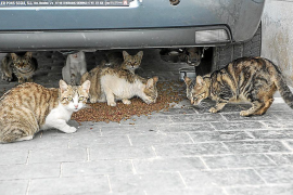 Most town halls now have cat population control campaigns