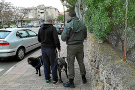 Forty-nine fines for breaching Calvia animal bylaw