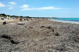 Tourist board alarmed by behaviour and beach maintenance