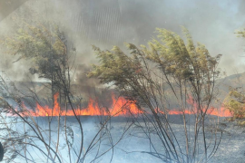 Two hectares affected by Sa Pobla fire