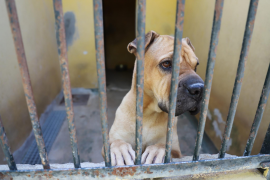 Fewer animals abandoned this summer