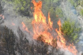 Forest Fire in Andratx.