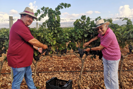 Rain is welcomed by wine producers