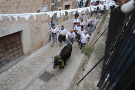 Fornalutx bull-run passes off without incident