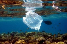 Half of waste collected from the sea is plastic