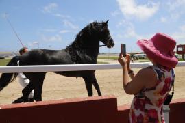 Hats & Horses event