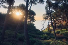 Cala Viñas, Mallorca