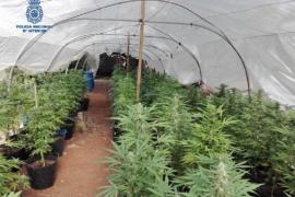 Drugs raid shuts down major marijuana supplier