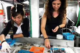 120 different species of marine life discovered in Majorcan waters