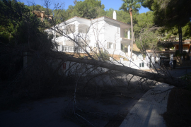 Majorca remains on yellow alert for high winds