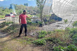 A sewage treatment plant floods orchards in Soller