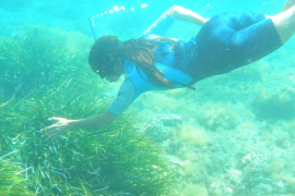 Posidonia and beaches worth 80 million a year