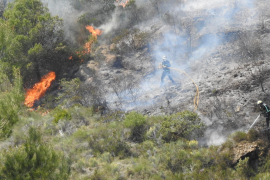 Majorca most affected by forest fires this year