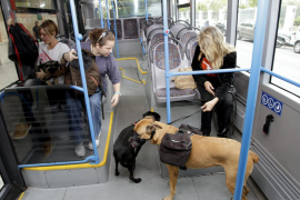 More bus lines for pets to travel on next month