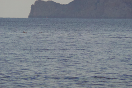 Dolphins spotted in Ibiza