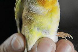 Majorca's world champion birds