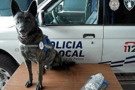 Police dogs get new homes