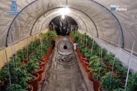 "Marijuana ""expert"" arrested in drugs operation"