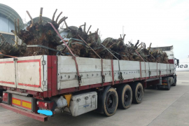 Olive tree cargo prevented from entering Majorca