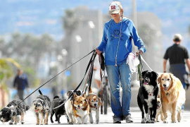 Palma considering DNA analysis of dog mess