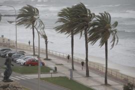 Majorca hit by 100km/h winds