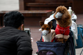 Hong Kong quarantines dog for coronavirus, experts caution over pet spread