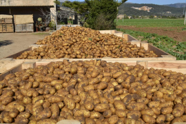 New potatoes during these strange days