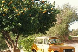 Gardening in Majorca