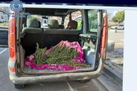 Arrested with almost three kilos of marijuana