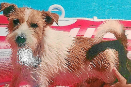 After ten days, Gio is found safe and sound in Calvia