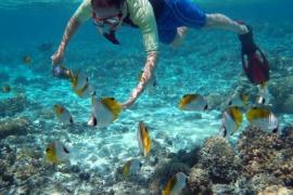 Tramuntana marine reserve needed to protect fish stocks