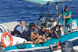 Three turtles rescued and a new project launched to reduce animal entanglement in ghost gear