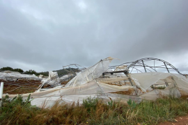 Harvest losses because of Saturday's storm