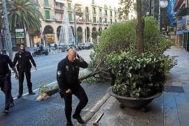 Winds batter Majorca